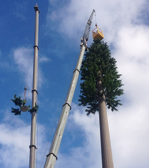 Pinetree Tower Install